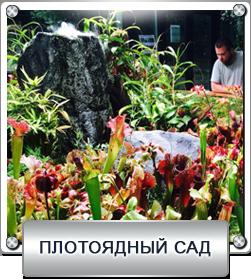 плотоядный сад