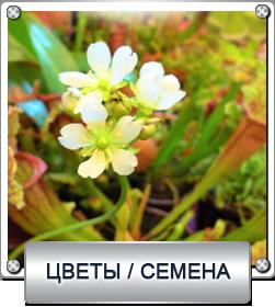 цветы - семена