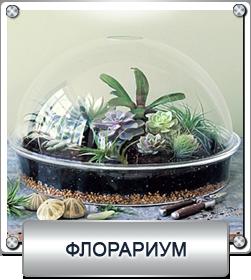 мирные растения