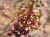 Странный цветок , напоминает непентес
