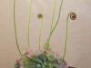 Закручивающийся цветок росянка – чудо природы