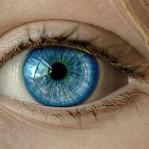 Хищные растения помогли офтальмологам пробраться внутрь глаза