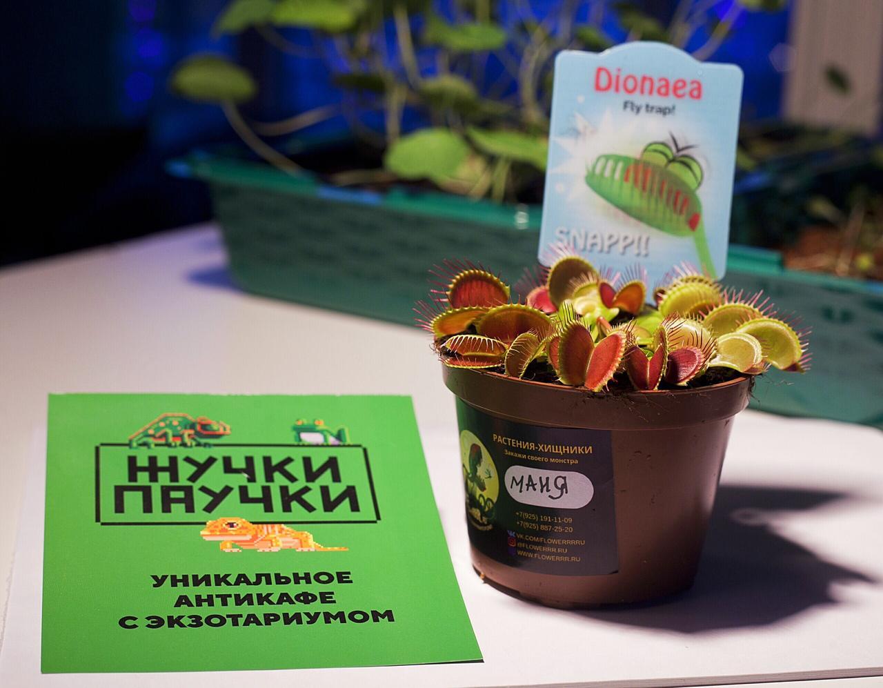 """23 февраля """"Тайны растений-хищников"""" в антикафе """"Жучки-Паучки"""""""