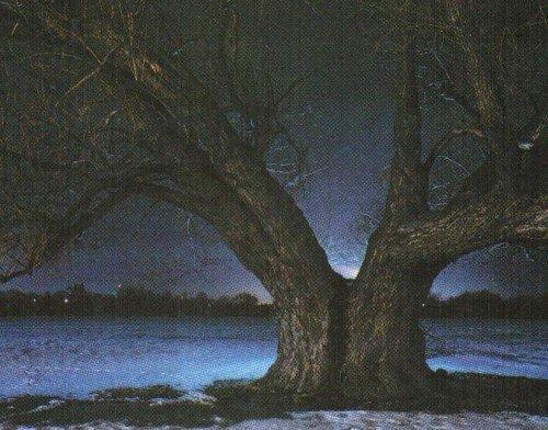 Дерево-убийца Умдглеби
