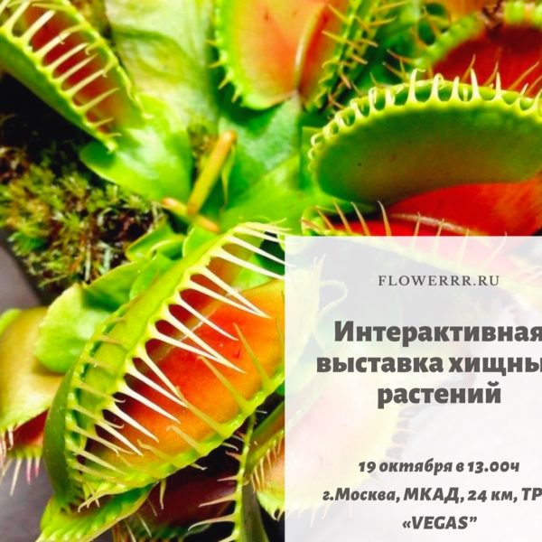 """19 октября интерактивная выставка хищных растений на """"Happylon"""""""