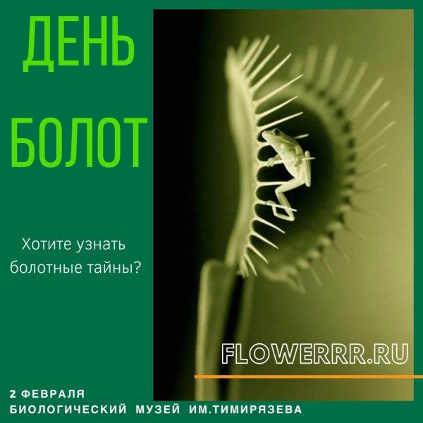 """2 февраля FLOWERRR на """"День Болот"""" в биологическом музее им. Тимирязева"""